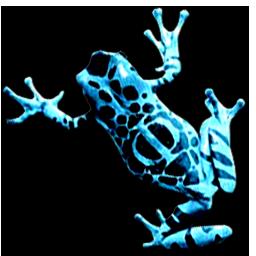 phifrog